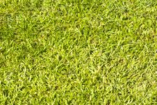 Free Close Up Of Grass Stock Photo - 4852620