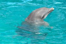 Free Dolphin In Blue Water Royalty Free Stock Images - 4852959