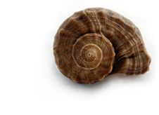 Free Colored Spiral Shell Stock Images - 4853324