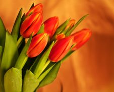 Free Tulips On Glowing Background Royalty Free Stock Images - 4854789