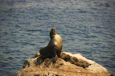 Seal Sunbathing Royalty Free Stock Images