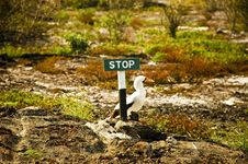 Free Galapagos Bird At Stop Sign Royalty Free Stock Images - 4856419