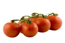 Free Six Fresh Tomatos Isolated On White Royalty Free Stock Photography - 4857697