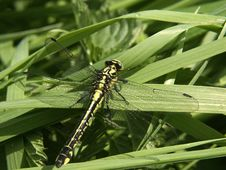 Free Dragonfly 03 Stock Photography - 4859952