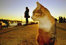 Sunset Beach Cats And Humans Royalty Free Stock Images