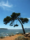 Free Island Near Cannes 01 Stock Images - 4860394