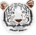 Free Tiger Royalty Free Stock Photos - 4863868