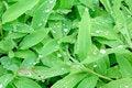 Free Grass Stock Image - 4866121