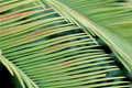 Free Palm Leaf Stock Photos - 4866143