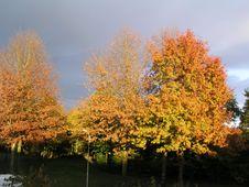Free Natural Light Stock Image - 4860041