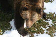 Free Bear Stock Photography - 4861292