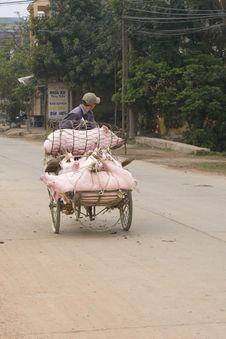 Free Vietnamese Man Transporting Pigs Stock Photos - 4861593