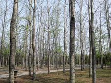 Free Woods Stock Image - 4864531