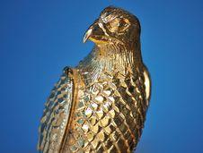 Golden Falcon Head Stock Photography