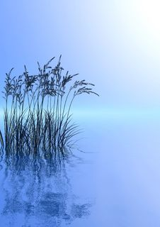 Free Water Plants Royalty Free Stock Images - 4867229