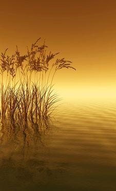 Free Water Grass Stock Photos - 4867233