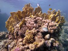 Reef Scene With Coral And Fish Stock Images