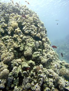 Reef Scene With Coral And Fish Stock Photography