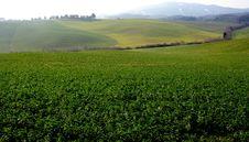 Italian Meadow Royalty Free Stock Image