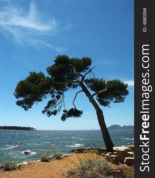 Island near Cannes 01