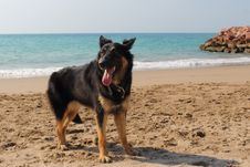 Free Young German Shepherd At The Beach Stock Photography - 48602392