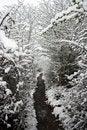 Free Winter Stock Image - 4875981