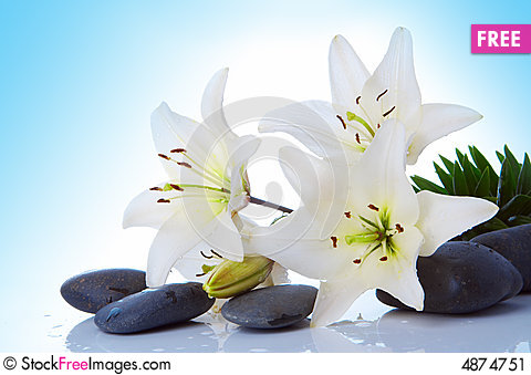 Free Madonna Lily Stock Image - 4874751