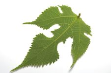 Free Green Leaf Stock Images - 4872154