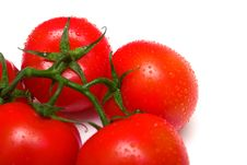 Free Perfect Juicy Tomatoes 4 Royalty Free Stock Photo - 4873625