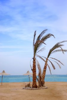 Free Palms On The Beach Stock Photography - 4873922
