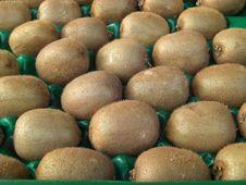 Free Kiwi Fruits Stock Image - 4875711