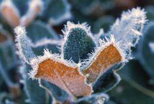 Free Leaves With Ice Slush Stock Photo - 4877380