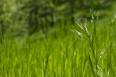 Free Piece Of Grass Royalty Free Stock Photo - 4879055