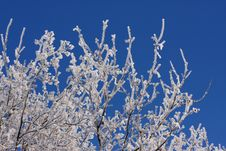 Free Snow Branch Royalty Free Stock Image - 4879546