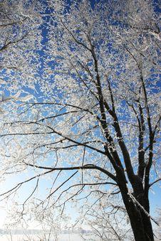 Free Snow Branch Stock Image - 4879581