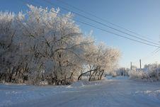 Winter Tree Royalty Free Stock Image