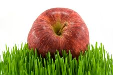 Free Apple On Green Grass Stock Image - 4879811