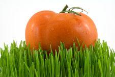 Tomato On Grass Royalty Free Stock Photo