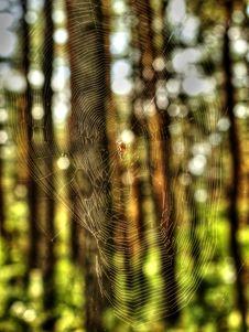 Free Web Of Spider Stock Photos - 48774403