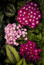 Free Pink Bouquet Royalty Free Stock Photo - 4885515
