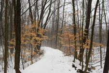 Free Snowy Path Stock Photos - 4880243