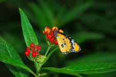 Free Monarch Batterfly On Flower Royalty Free Stock Photo - 4880525