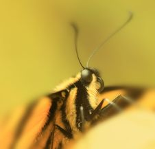 Free Butterfly Macro Royalty Free Stock Photos - 4882208
