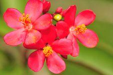 Free Flower Macro Series 14 Stock Images - 4882674