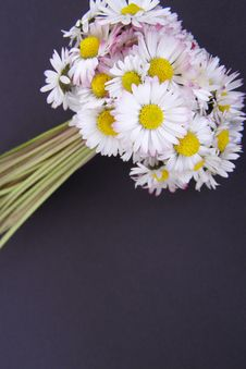 Free Daisy Flowers Bouquet Stock Image - 4883941