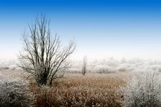 Free Winter Landscape Royalty Free Stock Images - 4883969