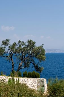 Free Olive Tree And Sea Royalty Free Stock Image - 4884306