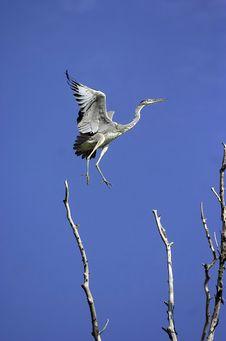Free Flying Bird Stock Photos - 4886033