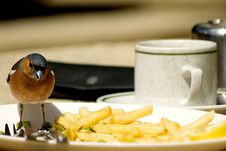 Free Bird Lunch Royalty Free Stock Photo - 4886385