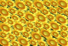 Free Arranged Sunflower Royalty Free Stock Photography - 4886427